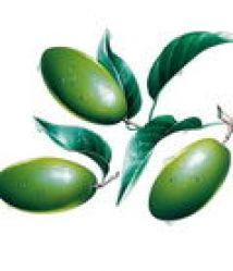 Olive Leaf Extract(oleuropein)
