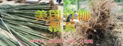 Huimin County Shandong Province Saint Planting Seedlings Professional Cooperatives